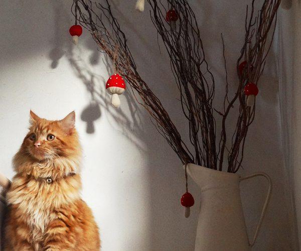 Ginger Tom Calabaza Christmas